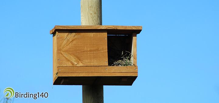 Caja nido en Villafáfila