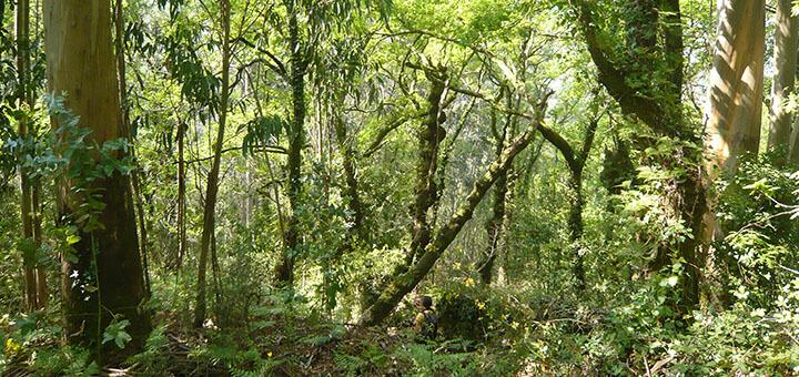 Hábitat de nidificación de las rapaces forestales