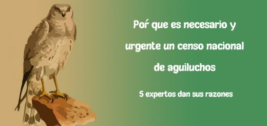 Censo Aguilucho Cenizo en España