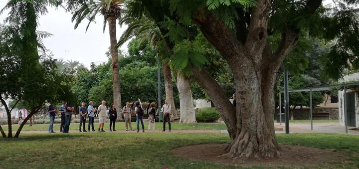 Conociendo los árboles singulares de la ciudad de Córdoba
