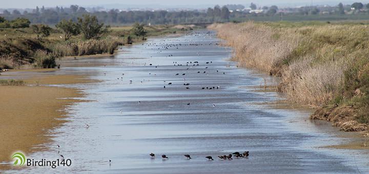 Moritos y cigüeñuelas en Doñana
