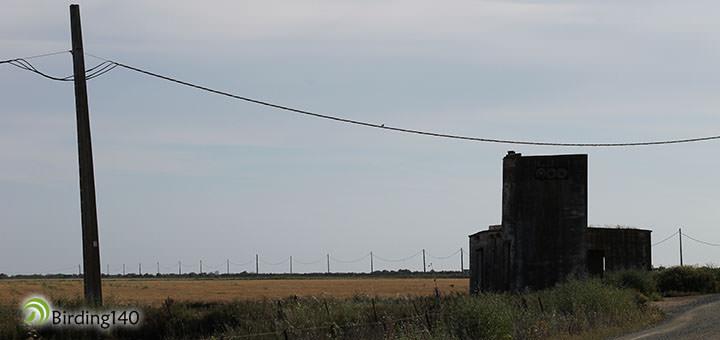 Primillar en Doñana