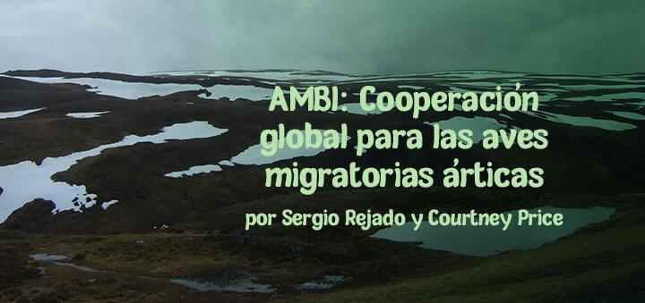 AMBI: cooperación global para las aves migratorias árticas