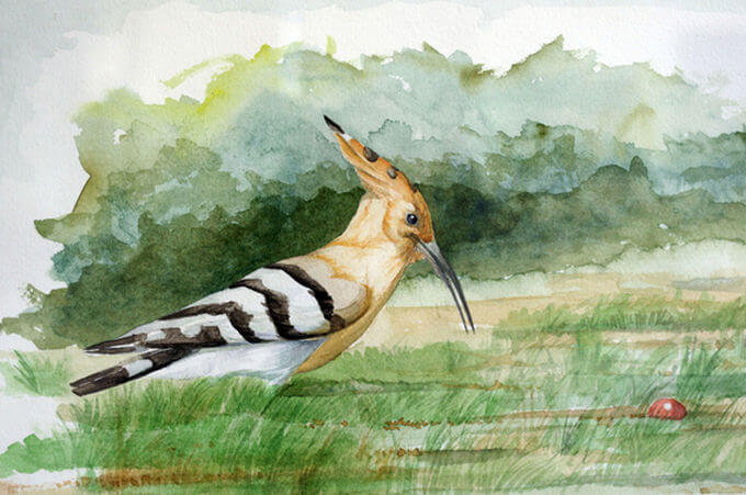 Hoopoe by Myriam Bernal
