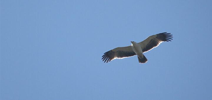 cielo azul águila rapaz
