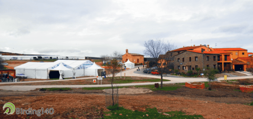 Villarreal de San Carlos FIO 2014