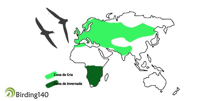 Mapa Vencejo Común