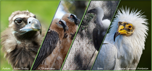 Doñana Birdfair 2014