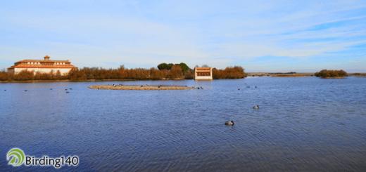 Laguna de la Casa del Parque